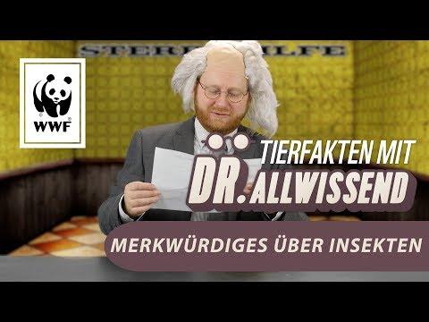 Lustige Fakten über komische Insekten mit Dr. Allwissend   WWF Deutschland