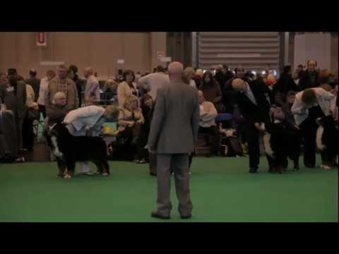 dfs Crufts 2011 Day 2 - Best of Breed Bernese Mountain Dog