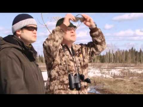 сезон охоты на телеканале охота и рыбалка