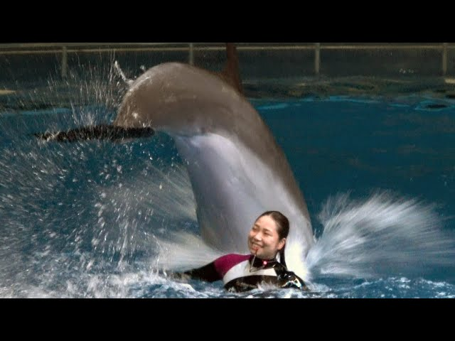 Dolphin Show at Maxell Aqua Park Shinagawa. 【4K】