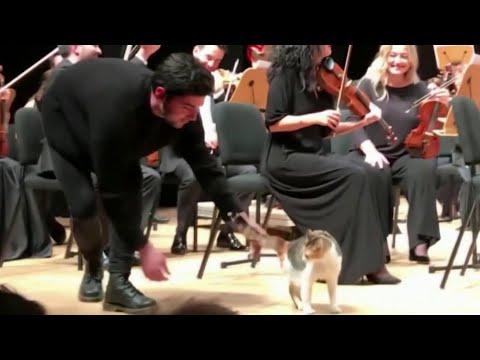 В Турции во время концерта симфонического оркестра на сцену вышла кошка.