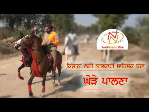 "Shri Guru Gobind Singh Marwari Horse Society, Punjab organised an event ""Long Rider's Ride"""