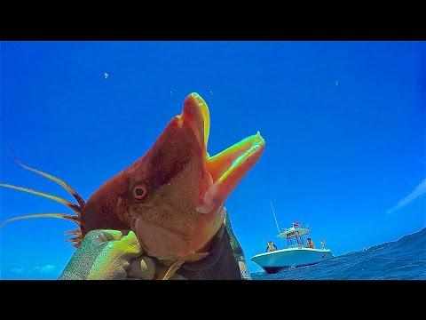 Spearfishing Florida Keys -  Islamorada 5-14-16