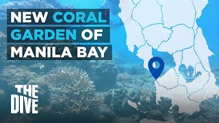 Discover Manila Bay's New Coral Garden In THE D VE