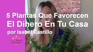 5 Plantas Que Favorecen El Dinero En Tu Casa por Isabel Castillo