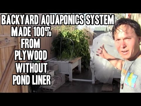 Backyard Aquaponics Made from 100% Plywood without Liner