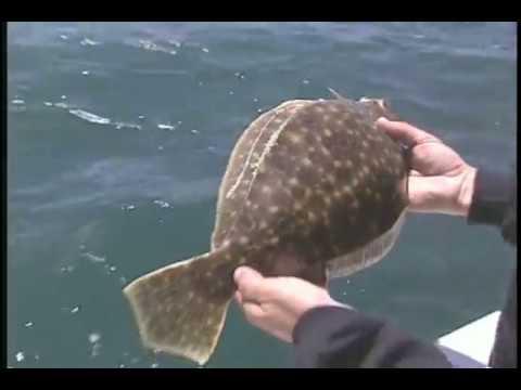 S1Ep7 Classic  RI Fluke, Charles River Catfish, CT Pike 2003
