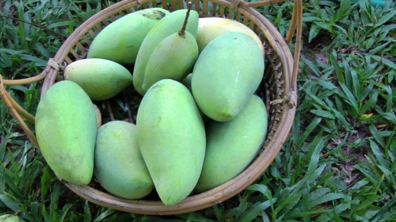 Mango Season Is Here! - The King Of Fruits