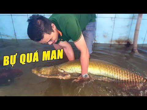 Hồ cá HẢI TƯỢNG tiền TỶ của lão nông ở Bình Thuận