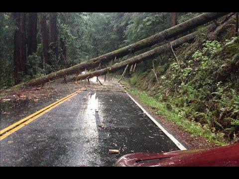 What Happens In Forest During The Storm | Что происходит в лесу вовремя дождя?