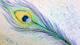 Peacock Feather In Watercolor Pencils