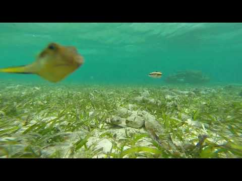 Seagrass meadow watch 1080p!