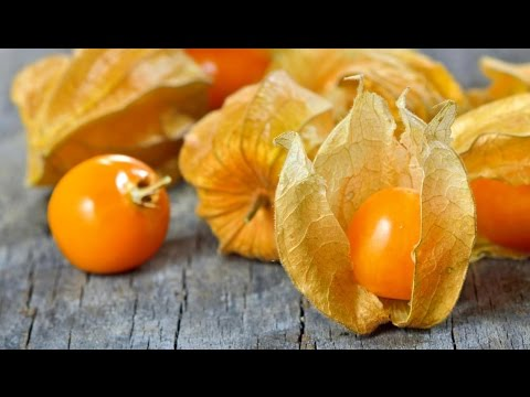 Top 10 Amazing Health Benefits of Physalis (Cape gooseberry)  Fresh Fruit | fruit of the month