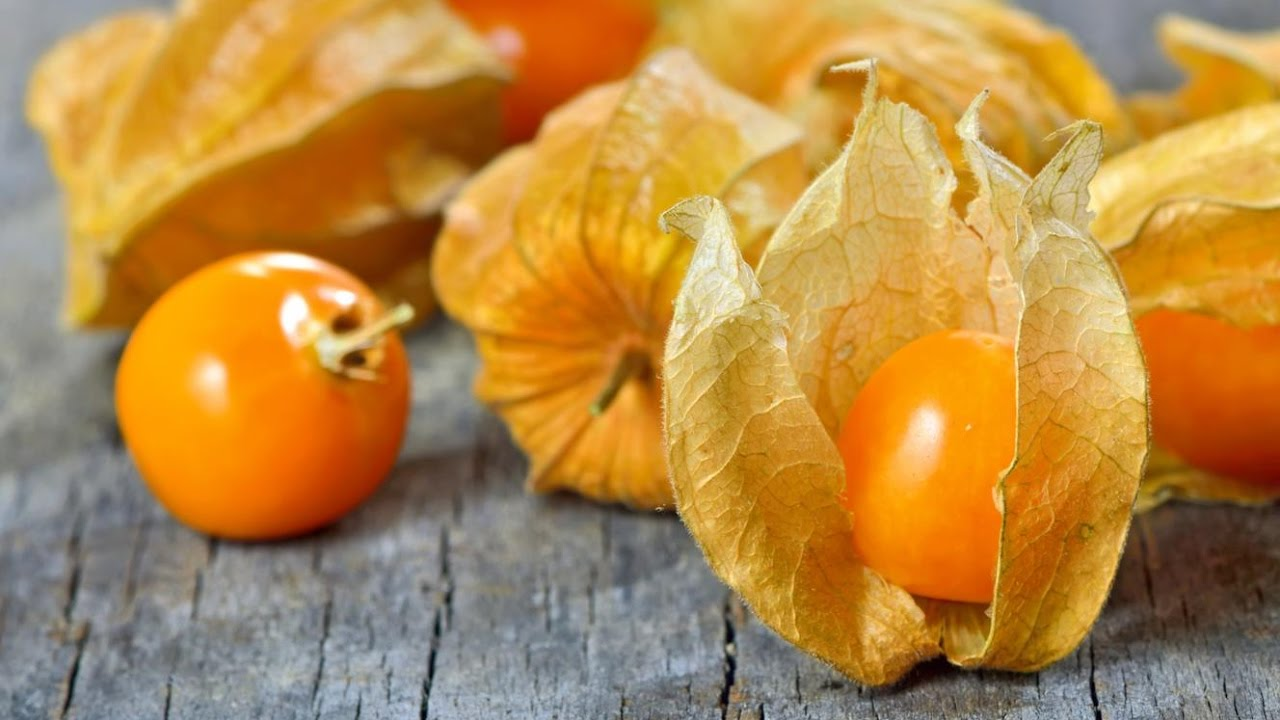 What is Physalis