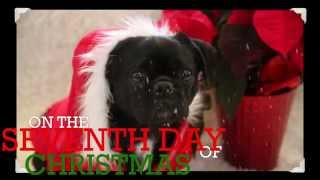 Funny Twelve Days of Christmas- Dog Edition!