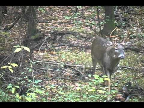Macon County, Georgia Illegal Bucks 3 1/2 And Older