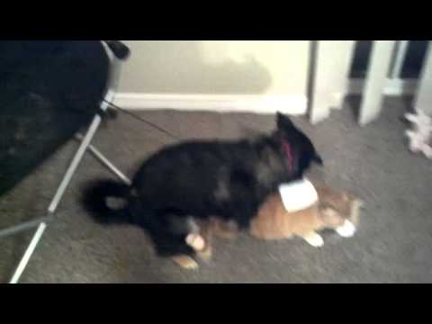 Girl Fucks a DOG WTF! Original video from YouTube · Duration:  2 seconds