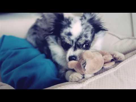 Лежанки для собак маленьких пород