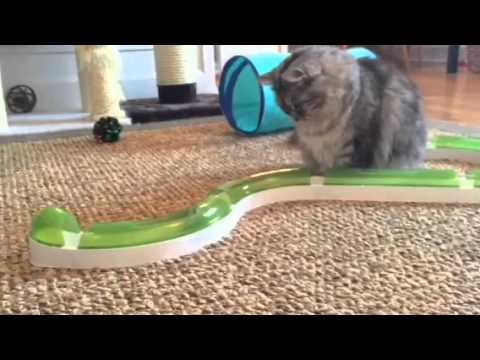 Charlie playing with the Catit Senses 2.0 Play Circuit