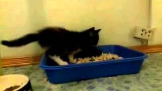 Котята в дар (2 месяца)