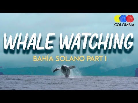 Whale Watching in Bahía Solano Chocó – Whale Watching Colombia