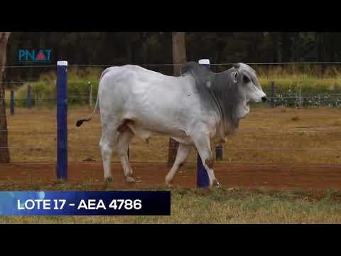 LOTE 17 - AEA4786 - NELORE