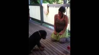 14 Week Rottweiler Puppy Obedience Training