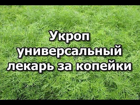 Укроп - универсальный лекарь за копейки!