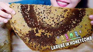 ASMR Eating Larvae in Honeycomb, Exotic food, eating sound PART 06| LINH-ASMR