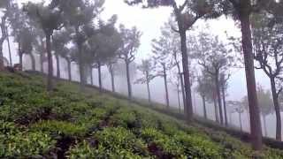 coonoor, mist in coonoor tea estate, Nilgiri. by tamilnatural2007