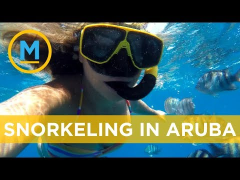 Melissa takes us underwater on a snorkeling adventure in Aruba | Your Morning