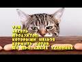 Топ десять продуктов, которыми нельзя кормить котов ни при каких условиях