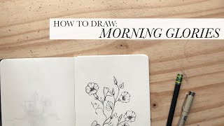How to Draw: Morning Glories | An Authentic by Frani Tutorial