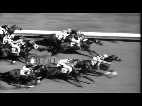 Seabiscuit wins the Massachusetts Handicap horse race in Boston, Massachusetts. HD Stock Footage