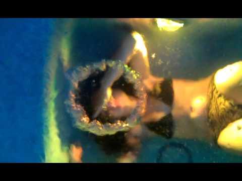 Bikini girl perfect bubble rings.