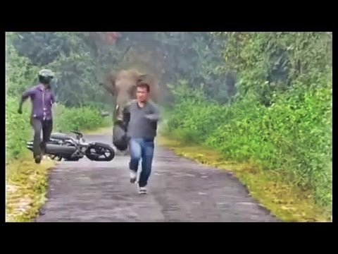 Download Video Lucu Bikin Ngakak - Prank ala Gajah