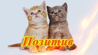 Смешные животные видео кошки собаки Fanny animals Создай себе хорошее настроение