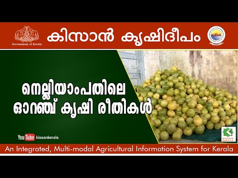 Features story on Orange and Vegetable farm Nelliyampathy, Palakkad