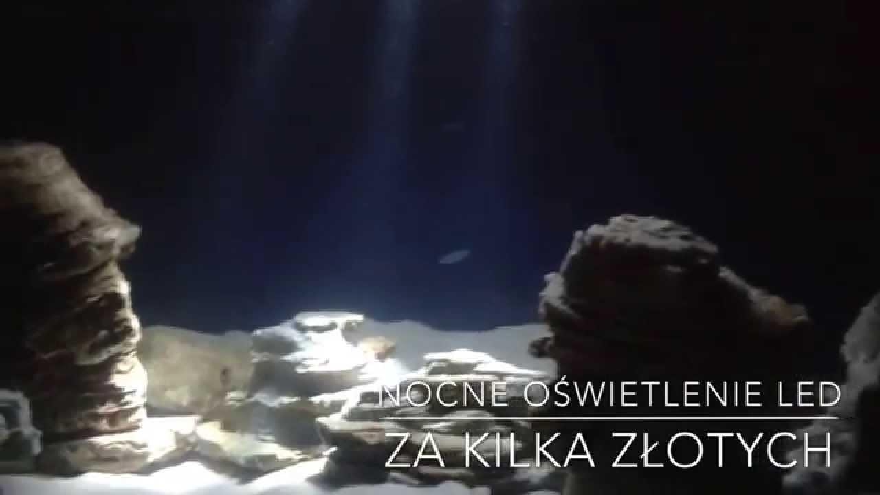 Oświetlenie Nocne W Akwarium Na Bazie Led Oświetlenie