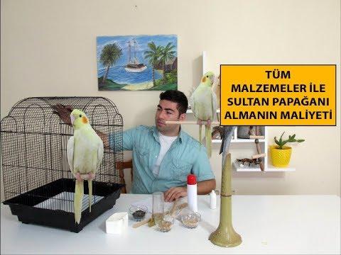 Sultan Papağanı | Kafes Almanın Maliyeti