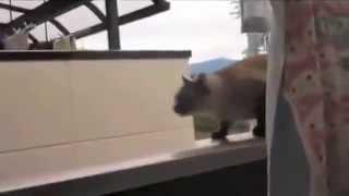 Cat Jump Fail - Instagram Got Video News