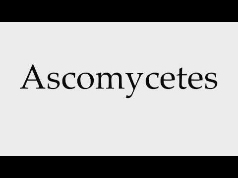 How to Pronounce Ascomycetes