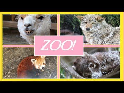 Chattanooga Zoo!