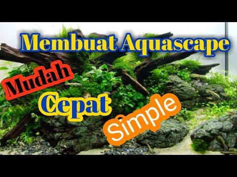 cara-membuat-aquascape-||-aquascape-bagi-pemula