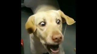 【面白い動物】最高におもしろい犬、絶対に笑える犬、かわいい犬の物語5