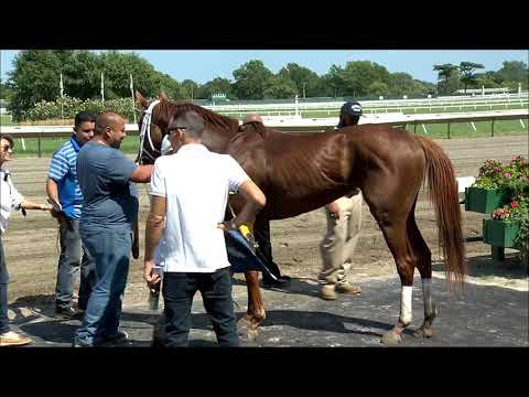 video thumbnail for MONMOUTH PARK 8-9-19 RACE 4