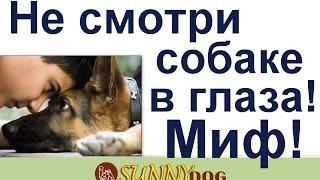 миф о собаках  нельзя смотреть  в глаза   она нападет  Развенчивам мифы о собаках
