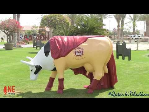 The Super Cow at Baladna Farms Qatar!