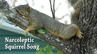 Narcoleptic Squirrel Song