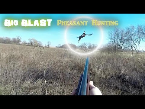 Big Blast Pheasant Hunting